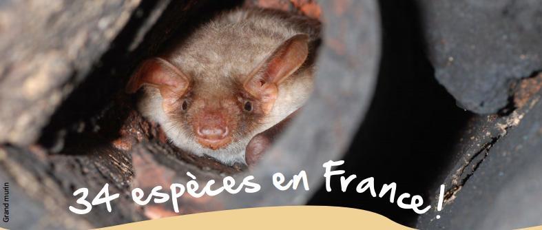 bats in france